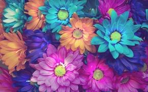 Картинка цветы, фон, лепестки, цветочки