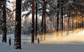Картинка зима, лес, лучи, снег, природа, рассвет, утро