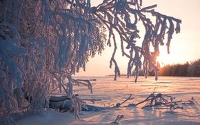 Картинка зима, иней, солнце, снег, деревья