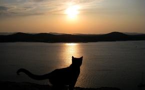 Обои Закат, Море, Кошка, Небо, Силуэт