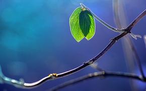 Обои макро, листва, блики, ветка