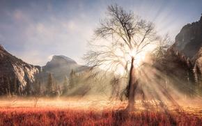 Обои зима, лес, солнце, лучи, свет, горы, ветки, дерево, США, штат Калифорния, Февраль, национальный парк Йосемити