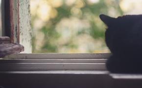 Картинка лето, кот, листья, тепло, нежность, окно, боке