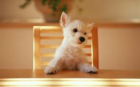 Картинка стол, стул, щенок