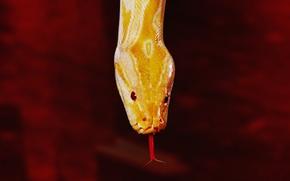 Картинка red, snake, yellow
