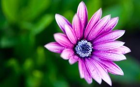 Обои макро, краски, petals, macro, цветок, dew, боке, colors, лепестки, flower, роса, bokeh, 2560x1600