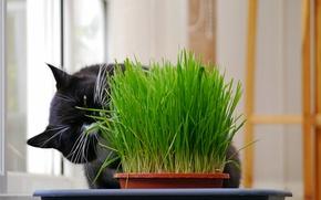Картинка трава, чёрный, Кот