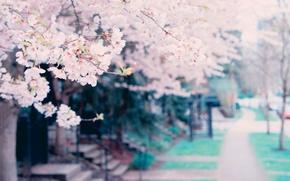 Картинка цветы, дерево, весна, tree, spring, blossoms