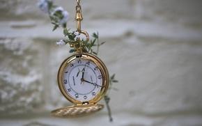 Картинка цветок, макро, стена, часы, боке