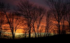 Картинка небо, деревья, закат, природа, вечер, сумерки, силуеты