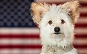 Картинка взгляд, фон, друг, собачка, пёс
