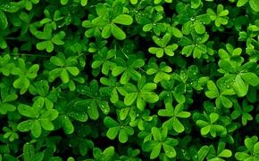 Картинка листья, капли, роса, растение