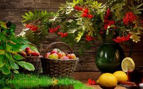 Картинка яблоки, еда, фрукты, лимоны, рябина, Натюрморт