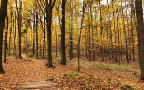 Картинка листья, деревья, Осень, листопад, trees, autumn, leaves