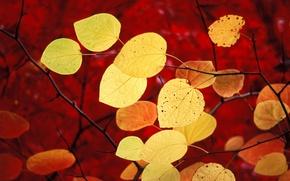 Обои красный, windows 7, осень, seven, листья