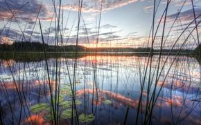 Обои камиш, небо, озеро, отражение, природа