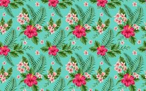Обои плюмерия, гибискус, тропики, цветы