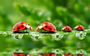 Обои роса, макро, рендеринг, отражение, обои от lolita777, зелень, насекомые, божьи коровки, капли