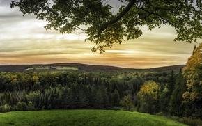 Обои луга, поля, Quebec, горизонт, деревья, ветки, трава, Канада, леса