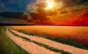 Обои природа, дорога, тропинки, поле, солнце, небо, трава, колосья, облака, закат