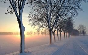 Картинка light, road, trees, winter, snow, morning, fog, awakening