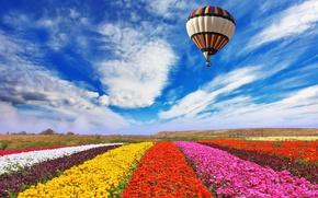 Картинка поле, небо, облака, цветы, природа, воздушный шар