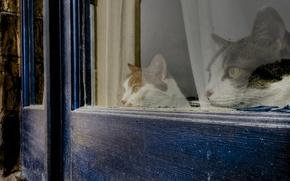 Обои дом, окно, наблюдение, коты