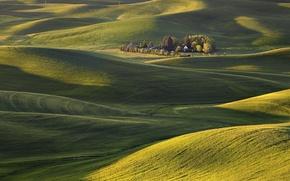 Картинка поле, трава, деревья, холмы, ковер, утро, США, штат Вашингтон