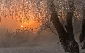 Обои зима, снег, туман, восход, дерево