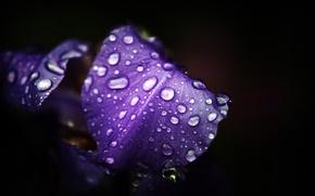 Обои макро, цветы, природа, фото