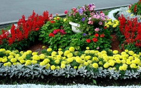 Картинка цветы, Сад, клумба