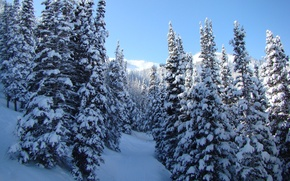 Картинка зима, снег, деревья, природа, пейзажи