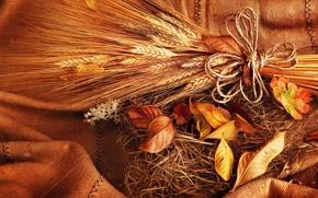 Картинка пшеница, осень, листья, зерно, желтые, колоски, колосья