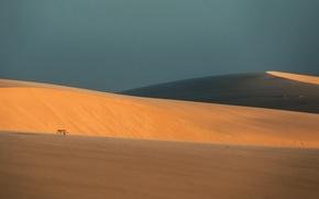 Картинка пейзаж, природа, пустыня, ослик