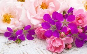 Картинка цветы, field, flowers, Roses