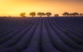 Картинка light, summer, twilight, flower, sky, field, landscape, nature, yellow, sunset, France, flowers, sun, orange, dusk, …