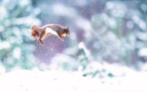Картинка снег, прыжок, орех, белка