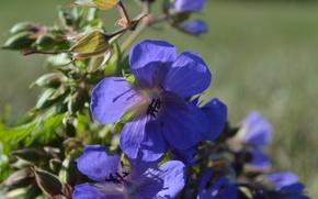 Картинка фиолетовый, цветы, природа