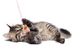 Картинка кошка, кот, котенок, серый, игрушка, мышь, мышка, белый фон, полосатый, cat