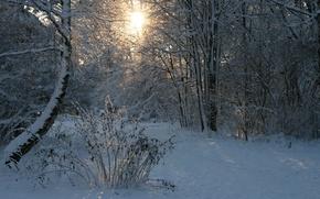 Обои солнце, снег, лес, зима