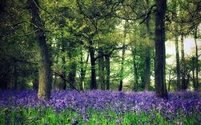 Обои лес, деревья, цветы, природа