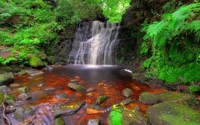 Картинка лес, ручей, камни, Англия, водопад, мох, кусты, Rivington, Tigers Clough