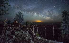 Картинка лес, звезды, пейзаж, ночь, бревна, млечный путь