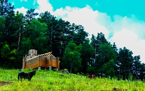 Картинка трава, природа, дом, Горы, лошади, сосны, сруб
