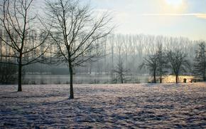 Картинка sky, trees, winter, sun, Belgium, clearly