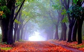 Обои осень, аллея, парк