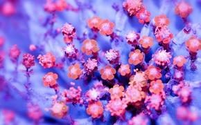 Картинка макро, цветы, краски, лепестки