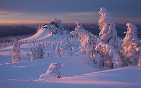 Картинка зима, лес, снег, закат, природа
