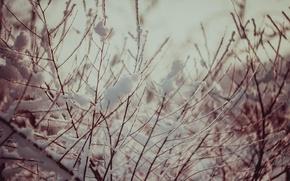 Картинка снег, дерево, Зима, Веточки