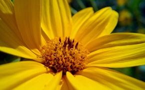 Картинка flower, macro, beauty, lumia, 820